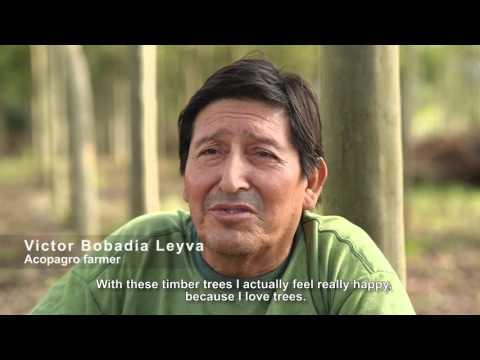 Alto Huayabamba - Agroforestry project in Peru (Eng)