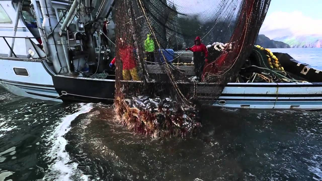 Sierra anderson alaska commercial fishing youtube for What is commercial fishing