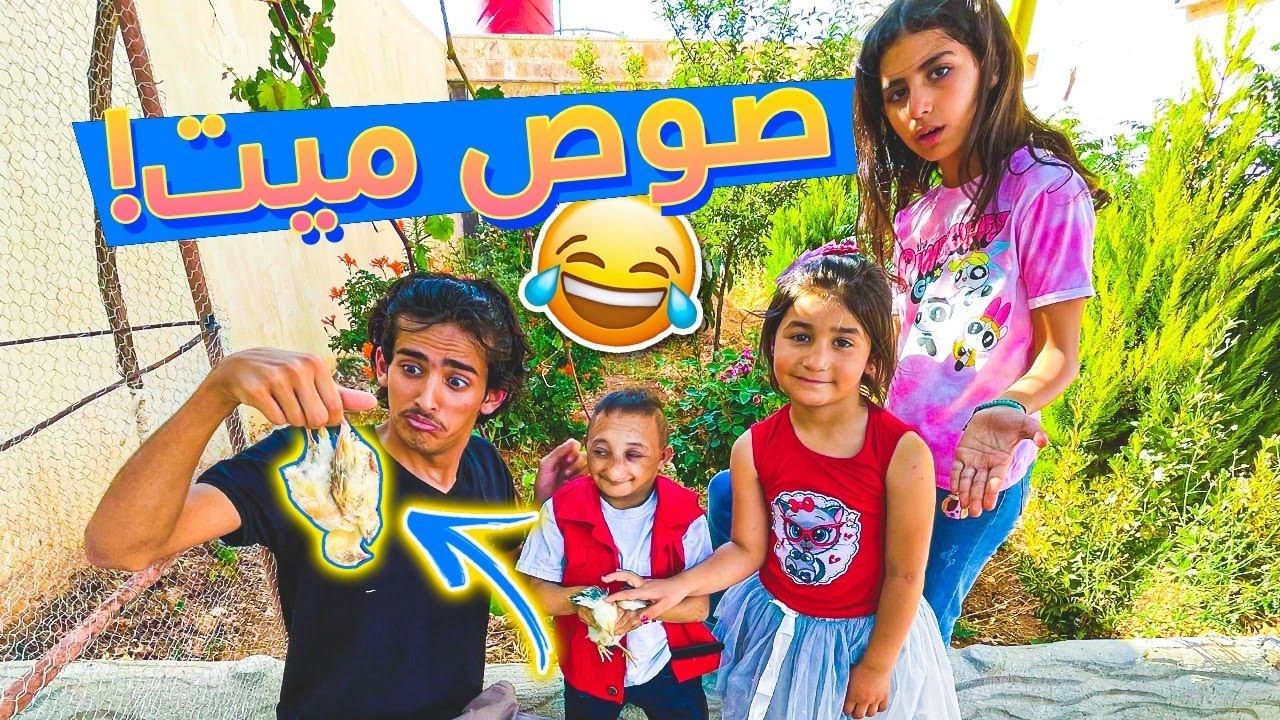 النتفة باع ليزن الصيصان  شوفوا ويش حصلهم😭💔