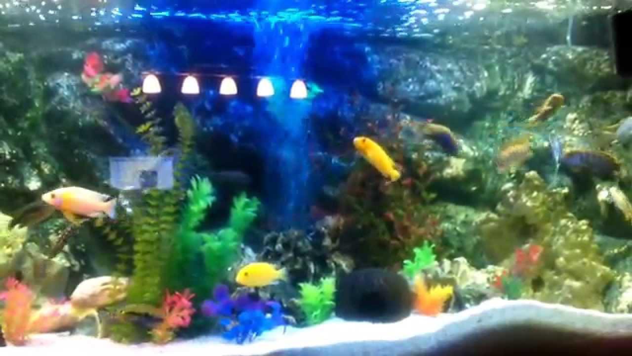 mein 400 liter aquarium mit barschen youtube. Black Bedroom Furniture Sets. Home Design Ideas