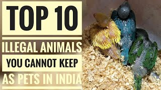 Top 10 Illegal Animals You Cannot Keep As Pets In India. | Part - 1.