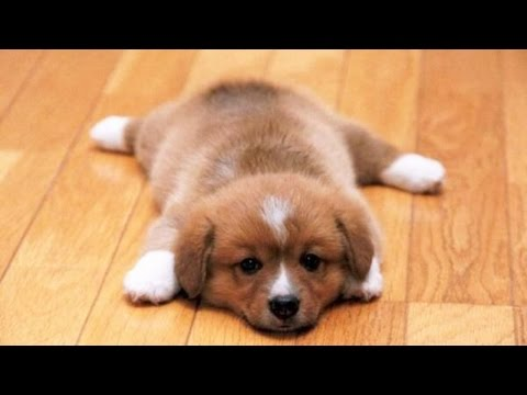 Cute Puppies Doing Funny Things Compilation (Cute Puppies Doing Funny Tricks)