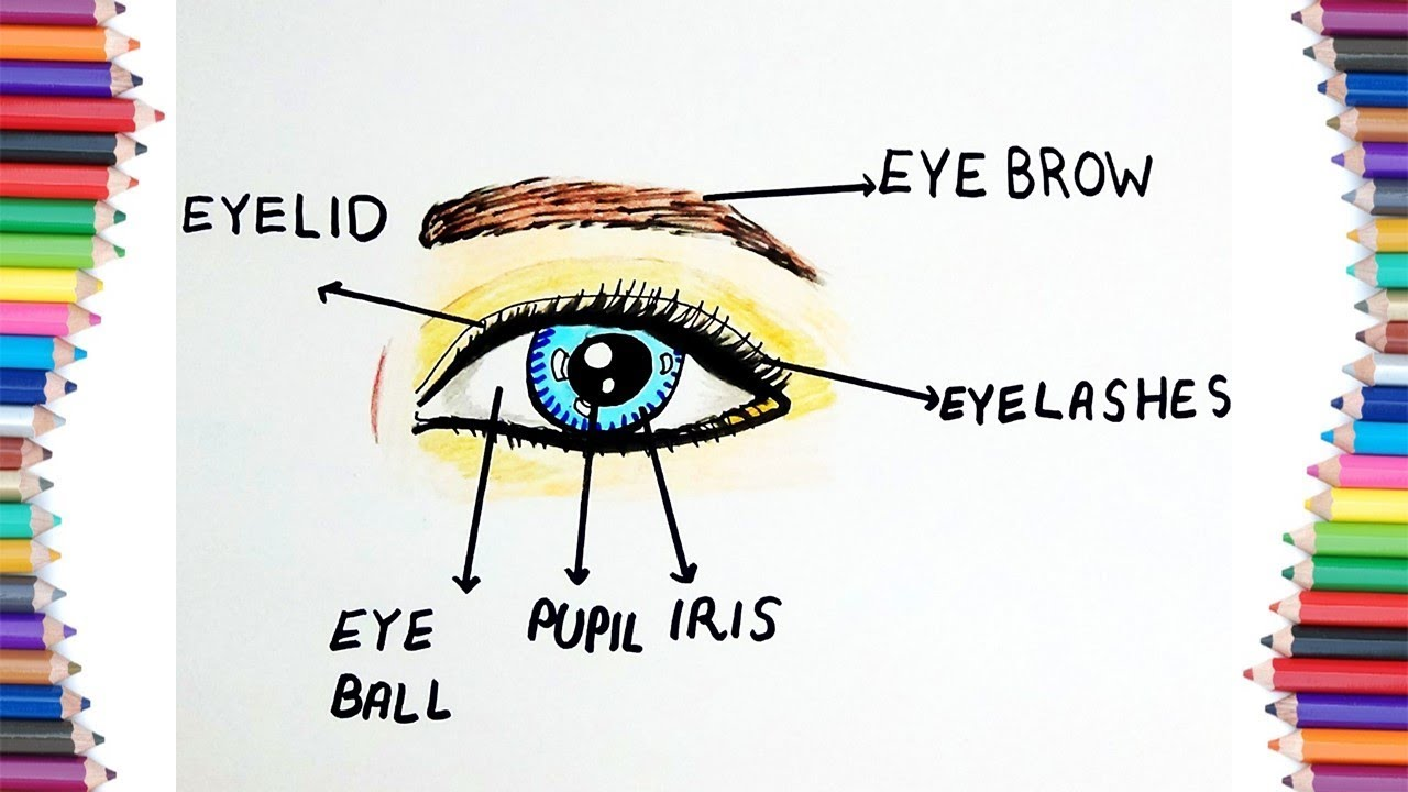 How To Draw Parts Of An Eye With Its Names For Kids Youtube