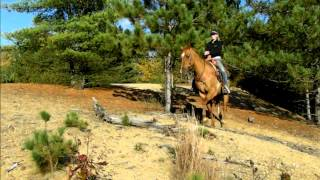 ***SOLD*** Gentle and safe AQHA Dun gelding FOR SALE