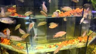 Рыбки аквариумные   зоомагазин(Рыбки аквариумные - зоомагазин., 2012-07-06T12:31:01.000Z)