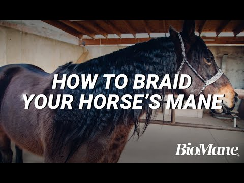 How to Properly Braid Your Horse's Mane