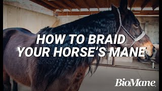 How to Properly Braid Your Horse
