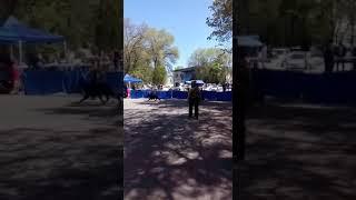 Выставка собак в Алматы. ВЕО
