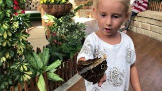 🎾 Что посмотреть в Дубай - 🦋 например парк бабочек!(Друзья, всем привет! Многие меня спрашивают, что посмотреть в Дубай необычного? Сегодня я покажу Вам парк..., 2017-01-20T16:09:08.000Z)