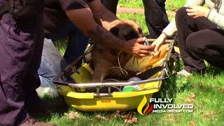 Mastic,NY: Firefighters Rescue Multiple Animals From Smokey House Fire 05-08-18