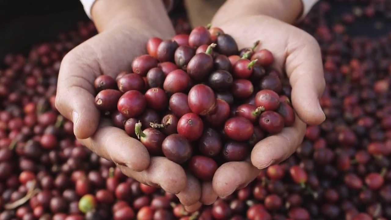 白水木精品咖啡 - YouTube