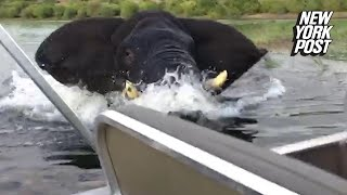 Enraged elephant charges at boat full of tourists