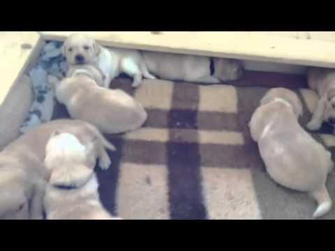 Hundeprofi Welpen Youtube