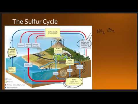 sulfur cycle Oxygen cycle oxygen, like carbon and hydrogen, is a basic element of life in addition, in the form of o 3, ozone, it provides protection of life by.