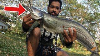 നാടൻ വാള പിടിച്ചു വറുത്തത് | Kerala fishing and cooking  | How to catch and cook Wallago attu