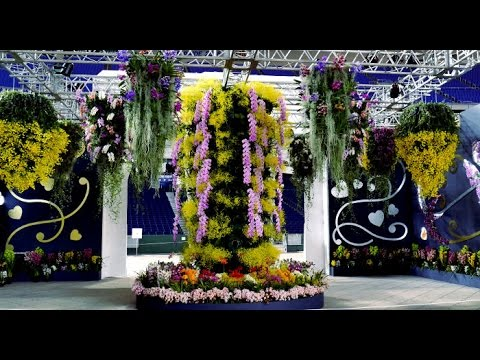 Tokyo Dome International Orchid Festival 2017 - The Tokyo Grand Prix