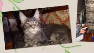 1 марта  - 1 день весны и Всемирный День Кошек!