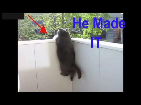 Funny Fat Cats, Fat Cats Can't Jump 🐱🐱🐱