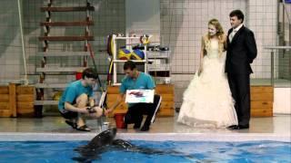 Подарок на свадьбу от дельфинов
