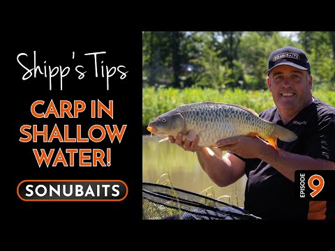 SHIPP'S TIPS - Episode 9 - Carp In Shallow Water!