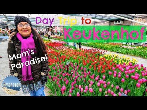 DAY TRIP TO KEUKENHOF from AMSTERDAM | NETHERLANDS TRAVEL VLOG