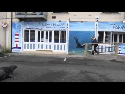 VIDEO: Una foca cruza la calle para comer en un restaurante