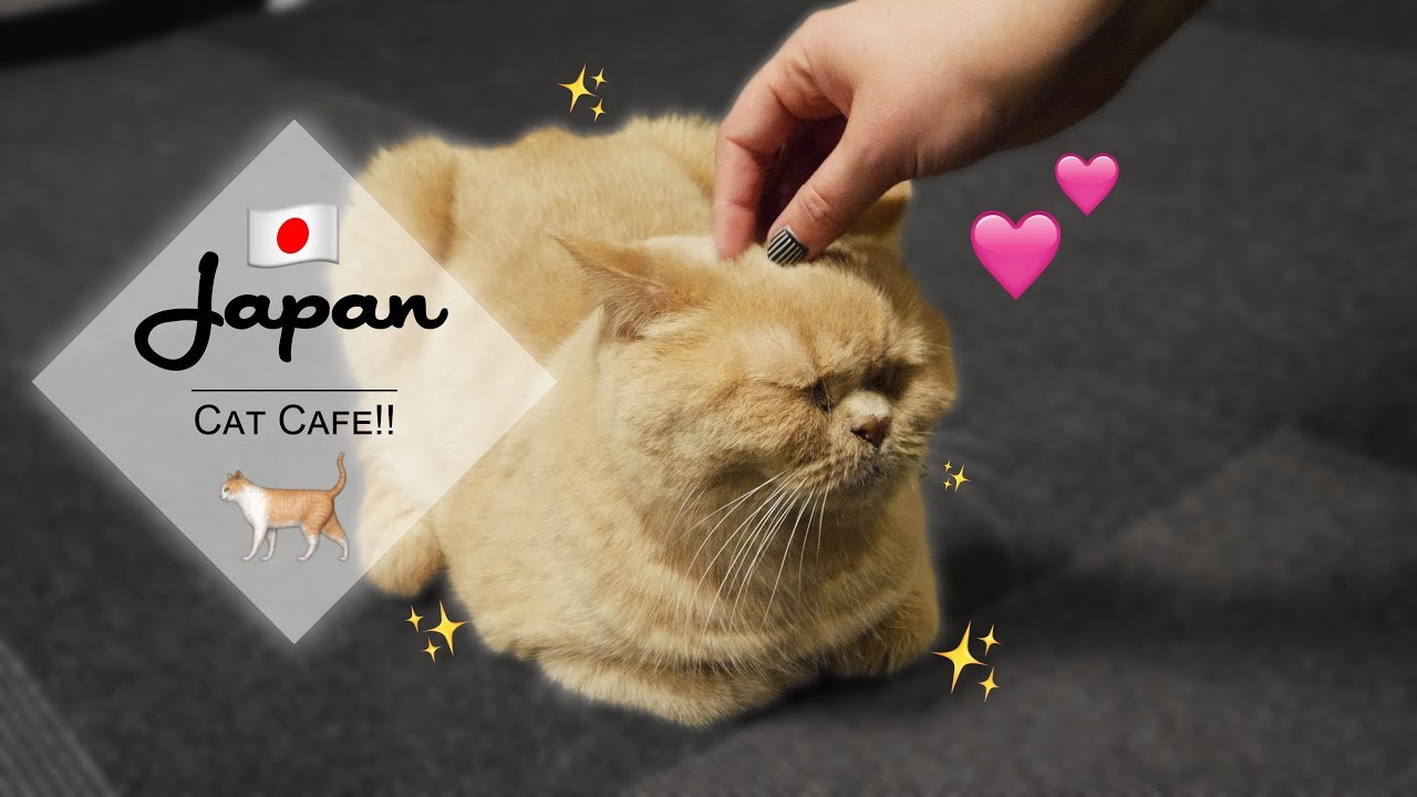 So Many Cats Cat Cafe Calico And Ufo Catchers In Japan