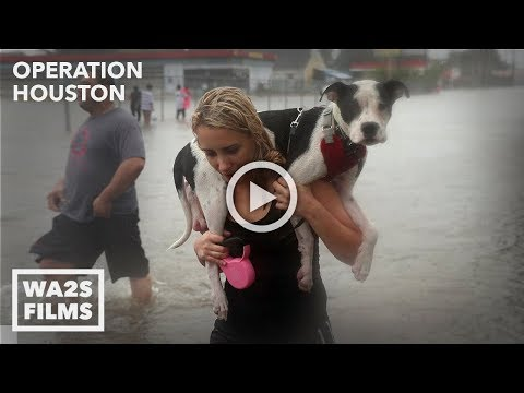 Houston SPCA Accused Of Killing Dogs After Hurricane Harvey - Hope For Dogs Like My DoDo