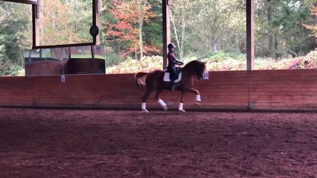 Pas de chevaux américains aux Championnats du Monde Jeunes Chevaux