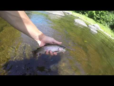 Fly Fishing The West River In Vermont