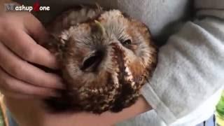 Животные любят ласку  Милые и симпатичные животные