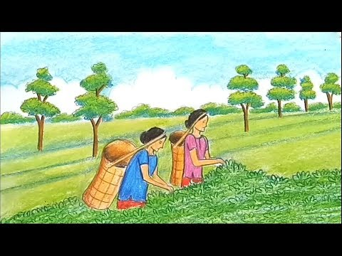 how-to-draw-a-scenery-of-tea-garden-step-by-step