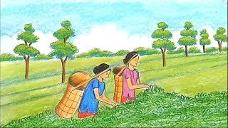 How to draw a scenery of tea garden  step by step