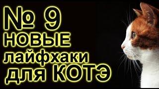 лайфхаки для кота 9