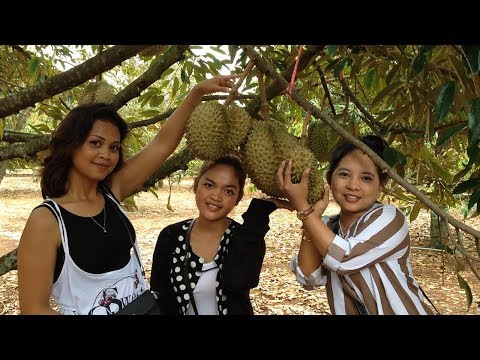 Travel With Me - Cambodia Durian Fruit Plantations | Durian Fruit Farm In Cambodia