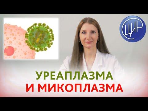УРЕАПЛАЗМА и МИКОПЛАЗМА. Лечить или нет? Условно-патогенные сероварианты уреаплазмы и микоплазмы.