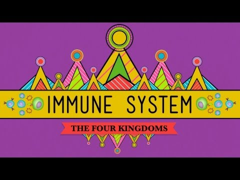Your Immune System: Natural Born Killer – Crash Course Biology #32