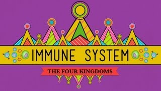 Your Immune System: Natural Born Killer - Crash Course Biology #32