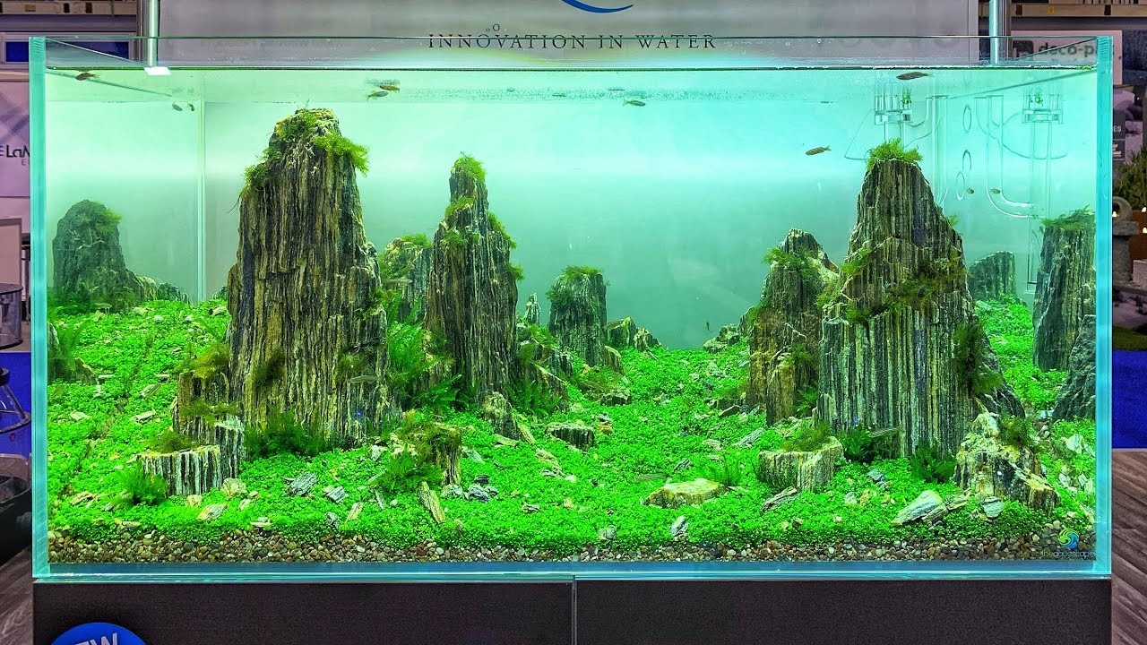 Beautiful Aquascapes At Aqua 2019 Youtube