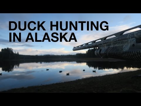 Duck Hunting In Alaska