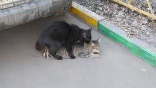 Кот кота пониже живота