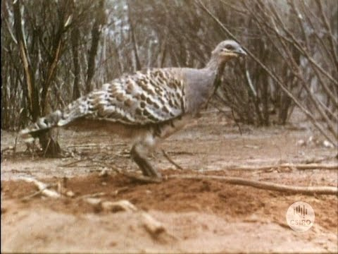 The Mallee Fowl (1957)