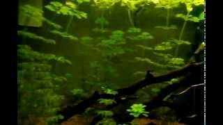 Types Of Beginner Aquarium Plants!