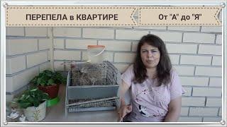 Видеокурс для начинающего  перепеловода (квартирного)! Вопрос-ответ (Тайм лист в описании)