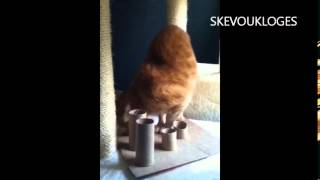 An Exotic Blind Cat Solves the Puzzle