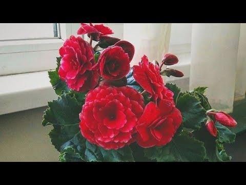 Они этого ЖДУТ//ПОМОГИТЕ ИМ, Комнатные цветы