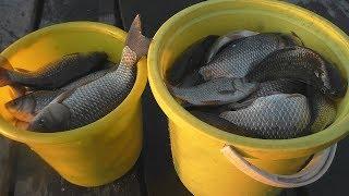 Советы для рыбалки Хитрости ловли карася на поплавок в ноябреКлев как весной