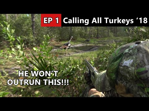 HE RAN RIGHT BY US!!! - Florida Public Land Turkey Hunt - Calling All Turkeys