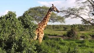 Safari in Tanzania 2014
