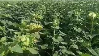сады украины против lg5661cl сравнение